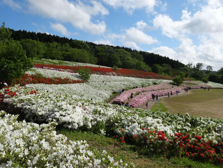 大乗寺丘陵公園|金沢市にある1万3千株のツツジや桜が咲き誇る名所をご紹介!