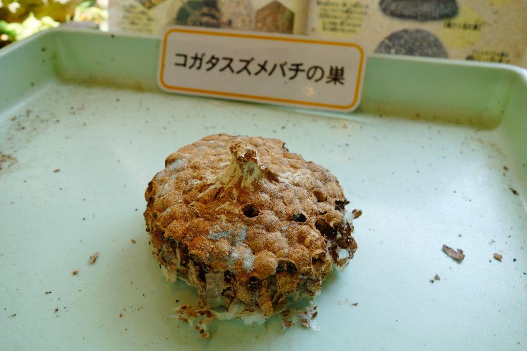 石川県ふれあい昆虫館虫