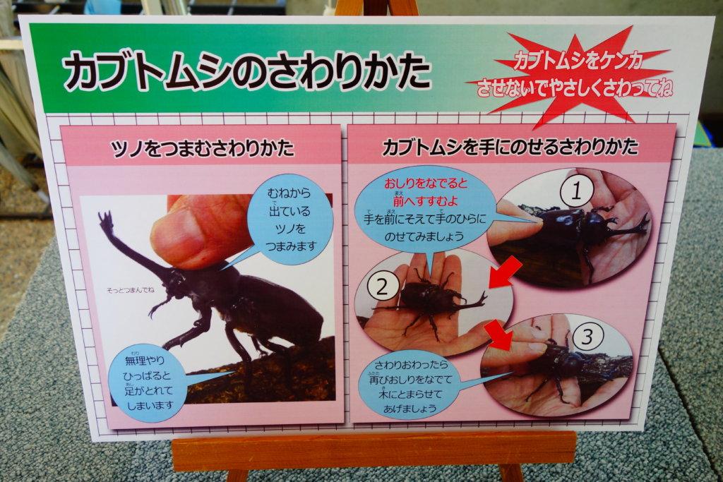 石川県ふれあい昆虫館カブトの森