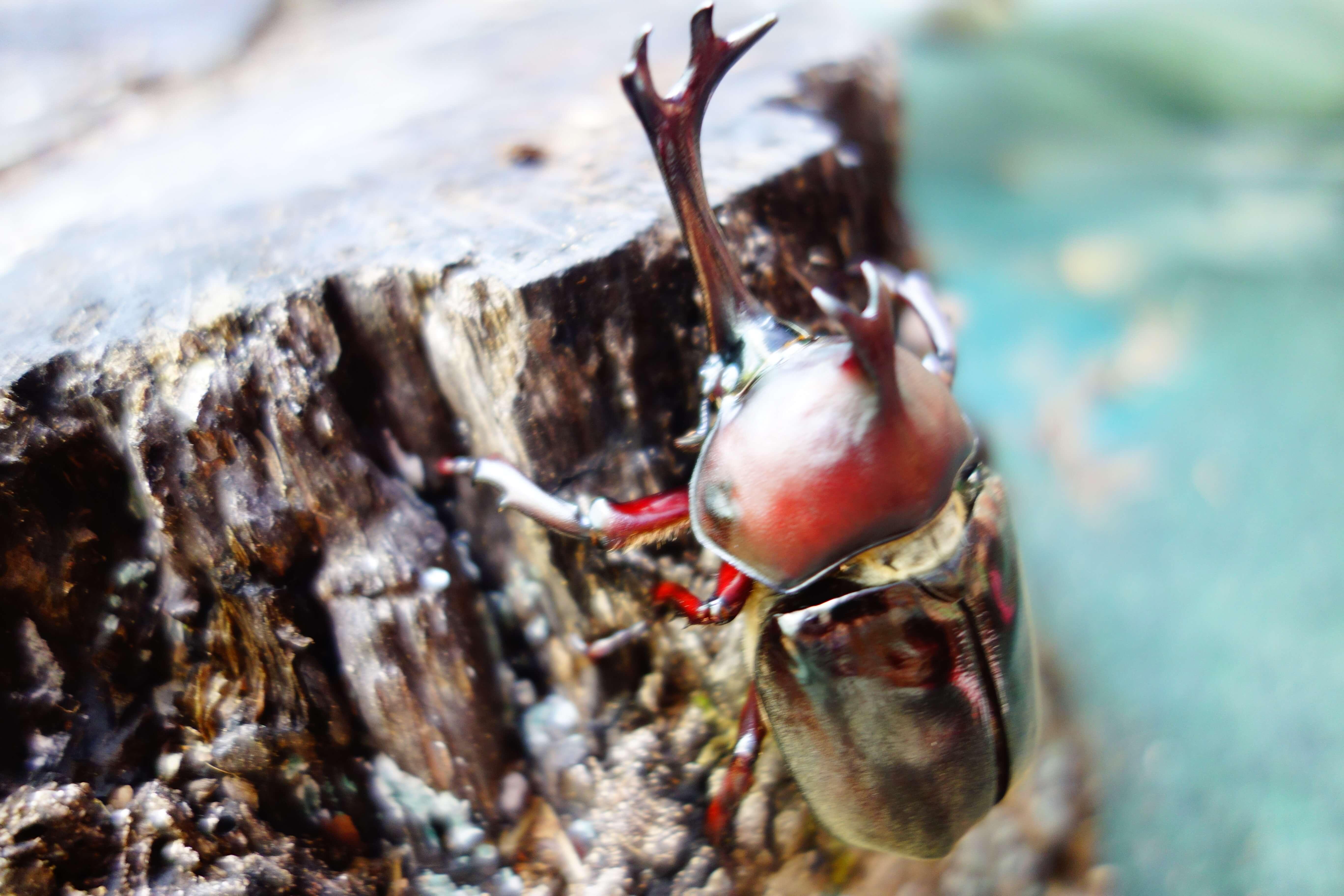 石川県ふれあい昆虫館|白山市にある「カブトの森」や「チョウの園」がおすすめ