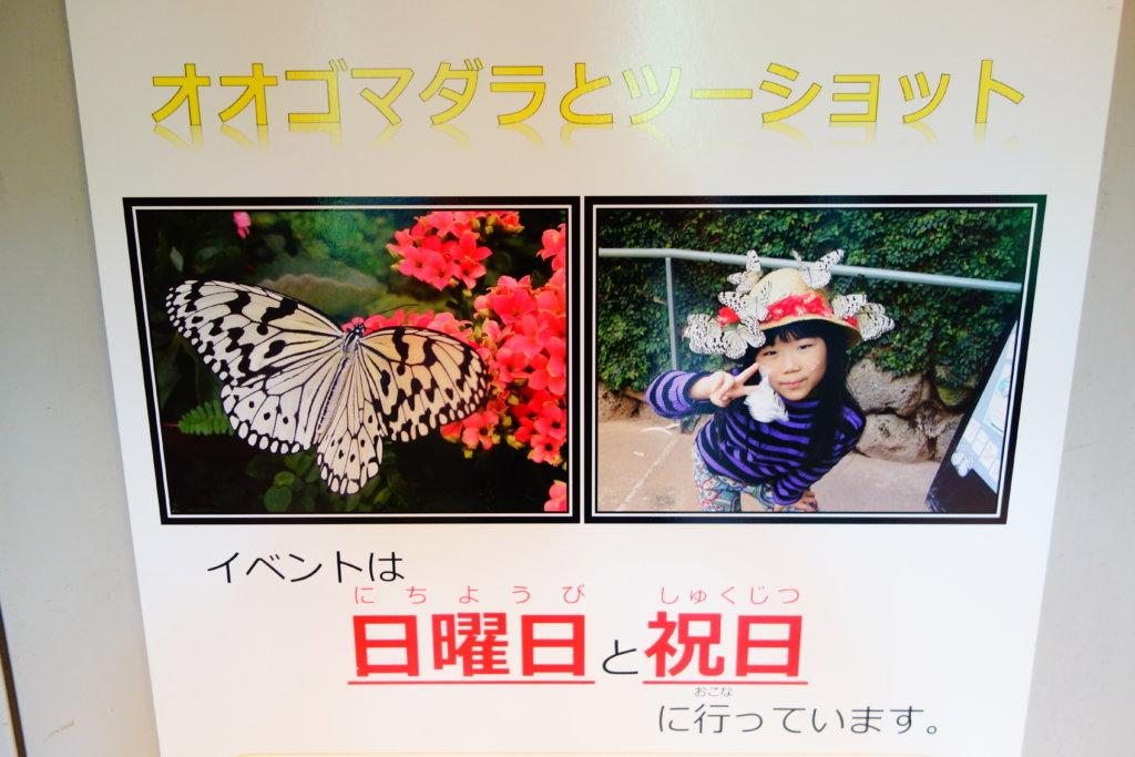 石川県ふれあい昆虫館チョウの園