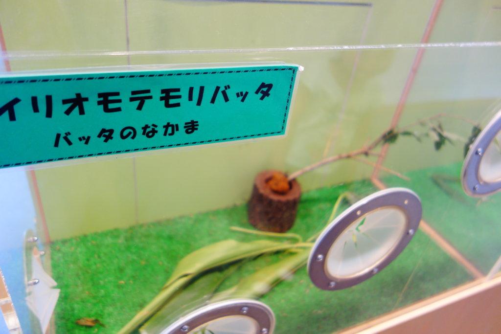 石川県ふれあい昆虫館展示