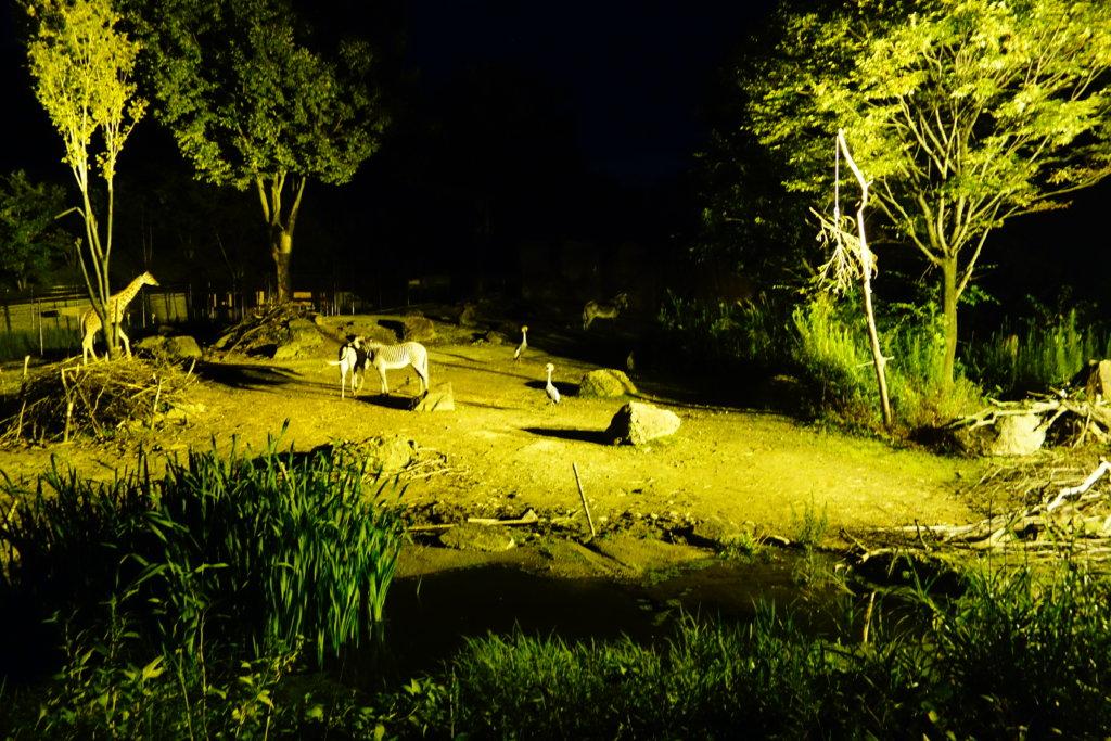 いしかわ動物園 キリン シマウマ