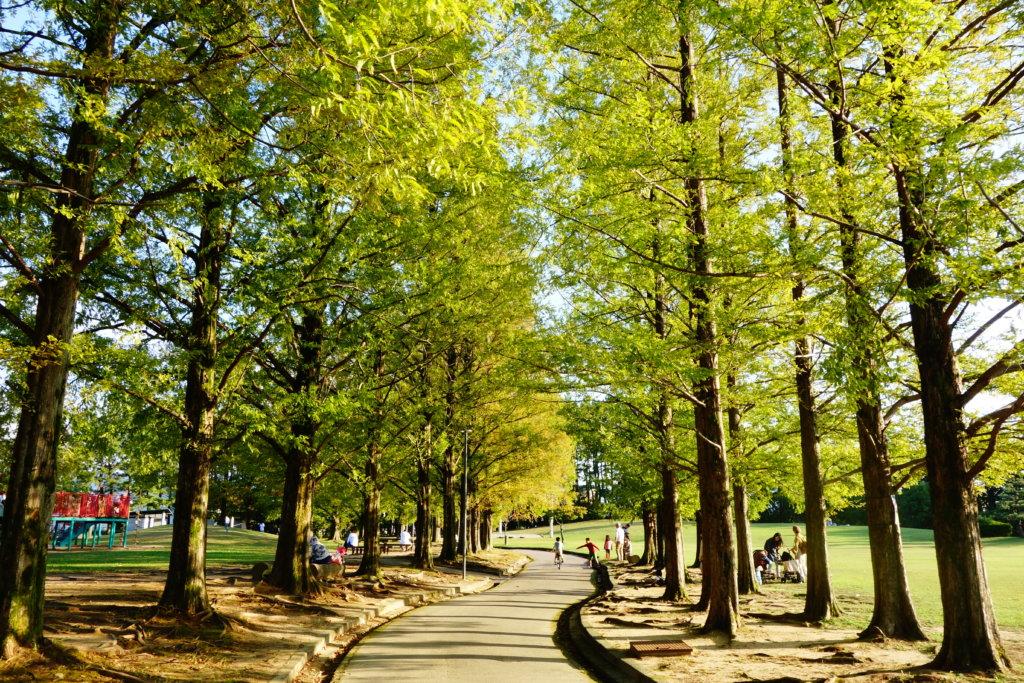 若宮公園 樹木