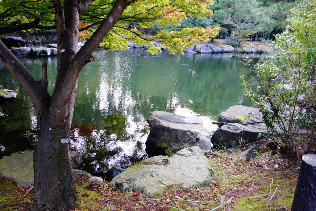 若宮公園 池