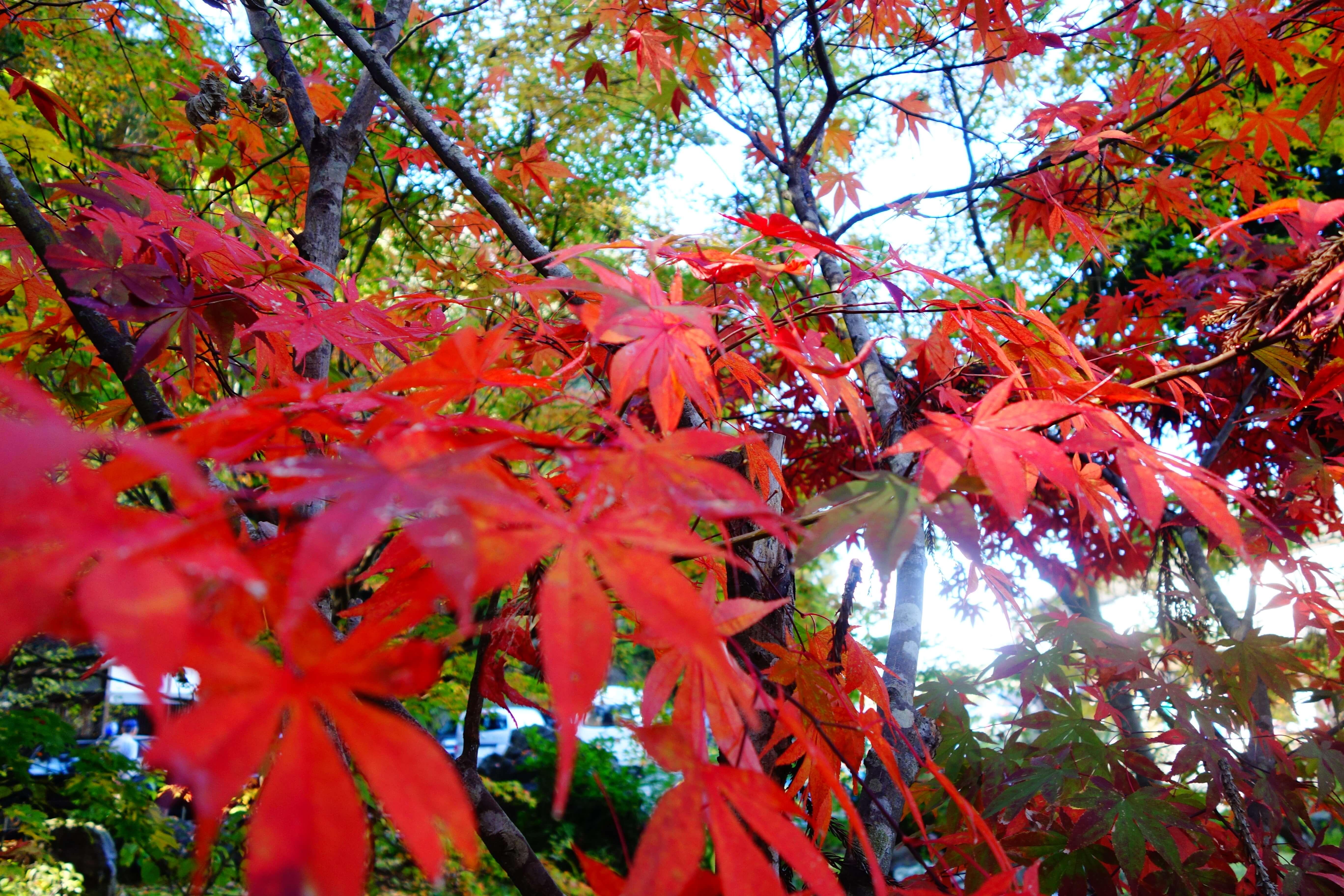 那谷寺|石川県の紅葉スポット!小松市にある北陸屈指の紅葉の名所
