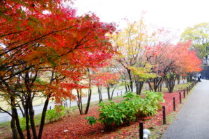 金沢城公園 紅葉