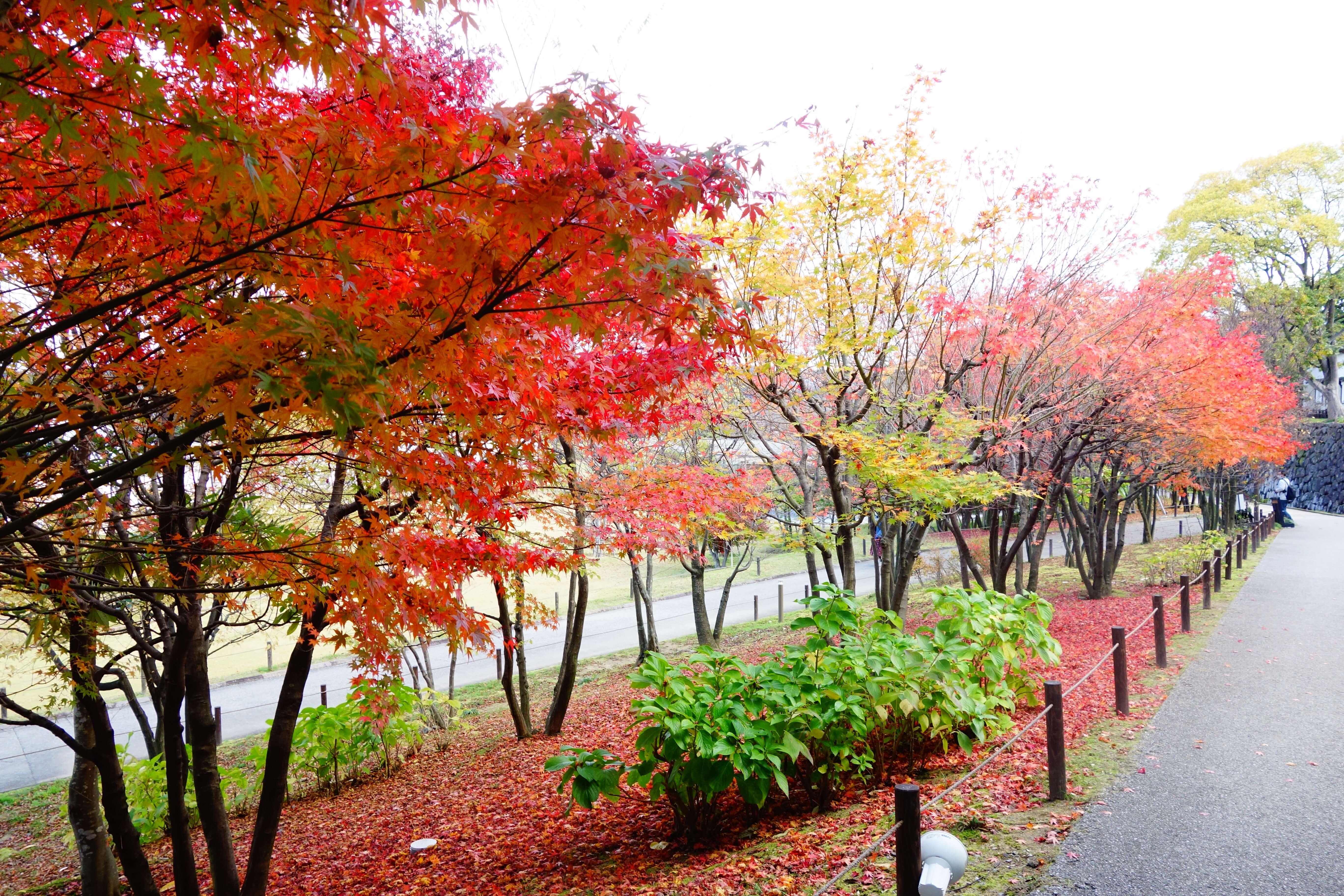金沢城公園|石川県の紅葉スポット!金沢市にある北陸屈指の紅葉の名所