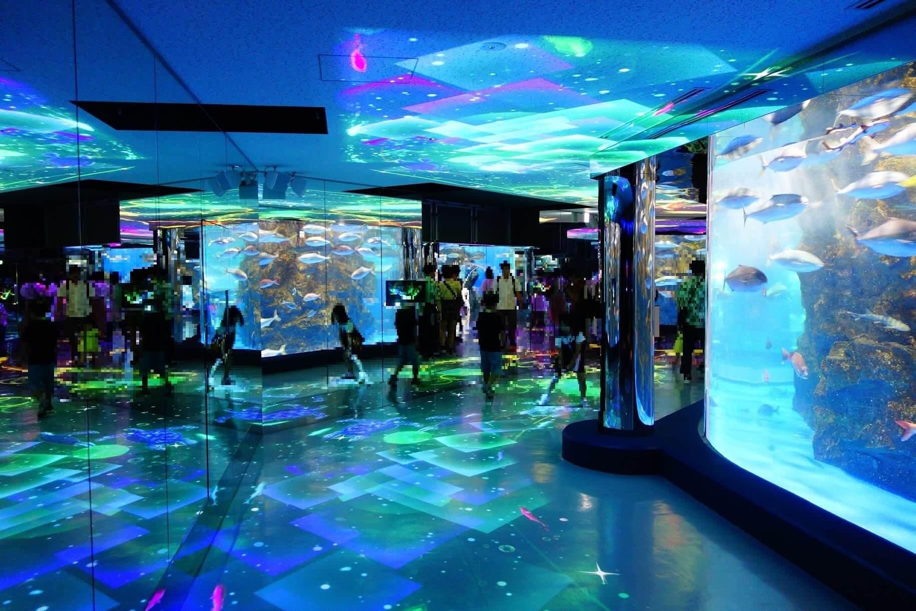 のとじま水族館 のと海遊回廊|能登七尾市で日本海初のプロジェクションマッピングに魅了