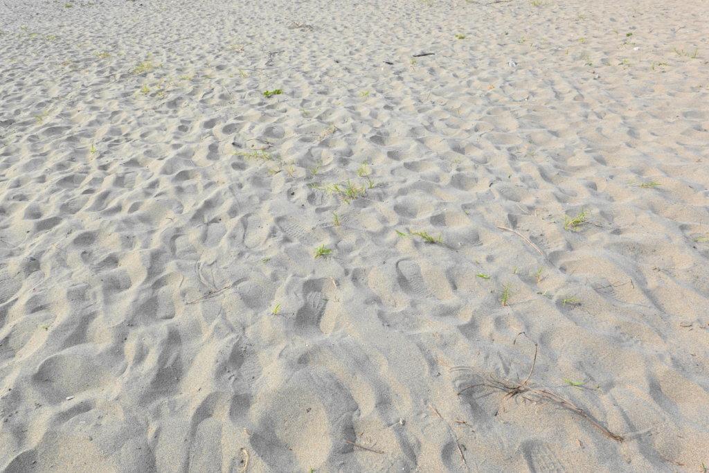 小舞子海岸の砂浜