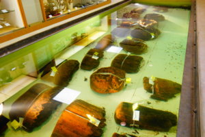 金沢市埋蔵文化財収蔵庫の木柱根