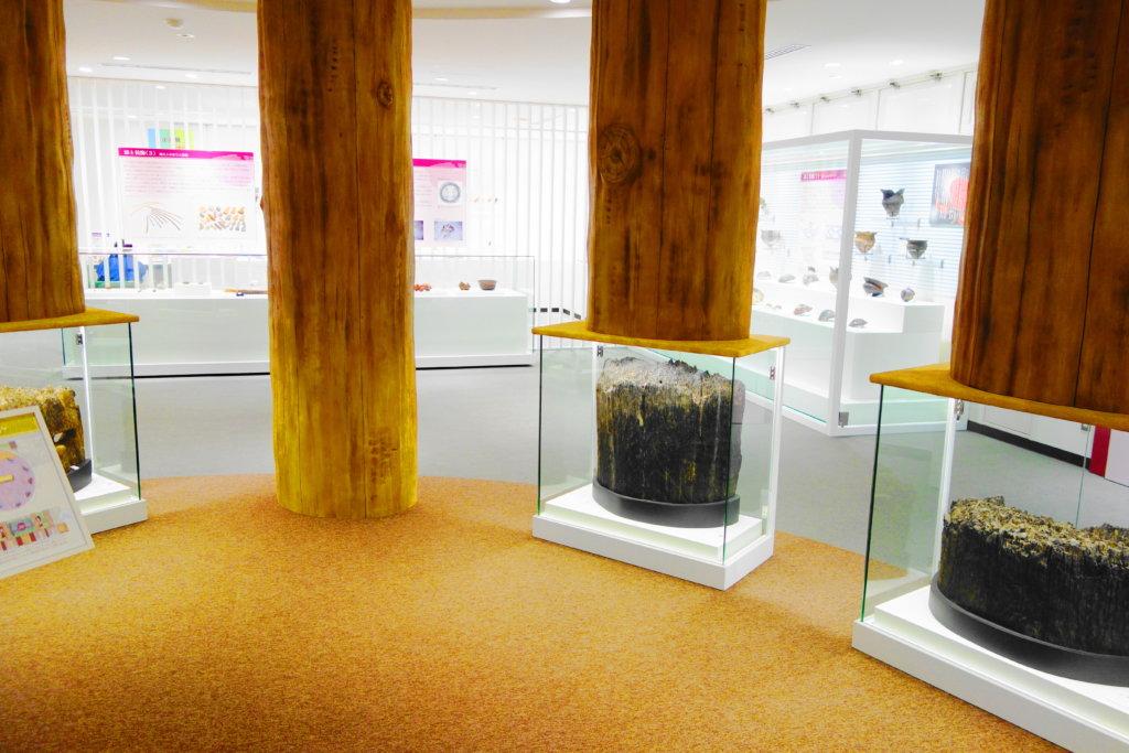 金沢市埋蔵文化財センターの展示物