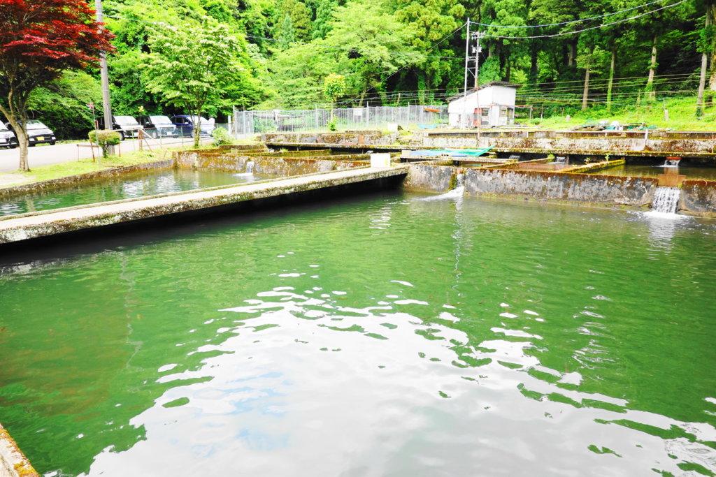 吉野観光の釣堀